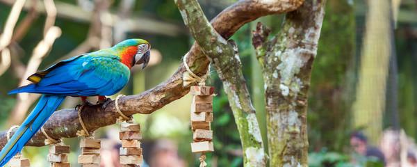 Blue parrot-ara-macaw, Brasil Foz do Iguazu. With selective focus. Fototapete