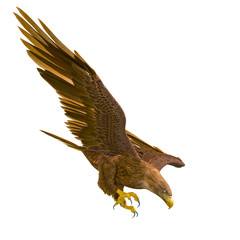 Fototapete - deepsea eagle hunting down on white background