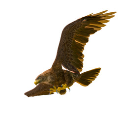 Fototapete - deepsea eagle hunting down on white background bottom view