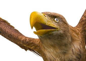 Fototapete - deepsea eagle on white background close up