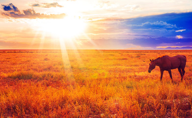 Chestnut Horse At Sunset In West Colorado Landscape At Stunning Sunset
