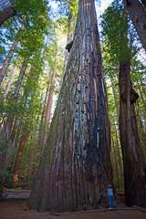 Kind im Wald mit riesen Bäumen