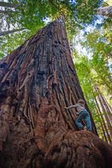Kind in den Redwoods