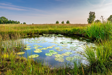 Natural pond in nature reserve near Bodegraven in the Netherlands. Pond with water lillies, reed and rich grassland. Wetlands biodiversity.