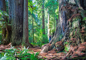 Child in the Redwoods