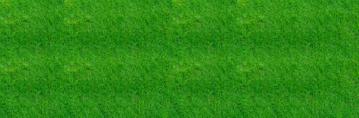 Green grass texture for background. Close-up image.