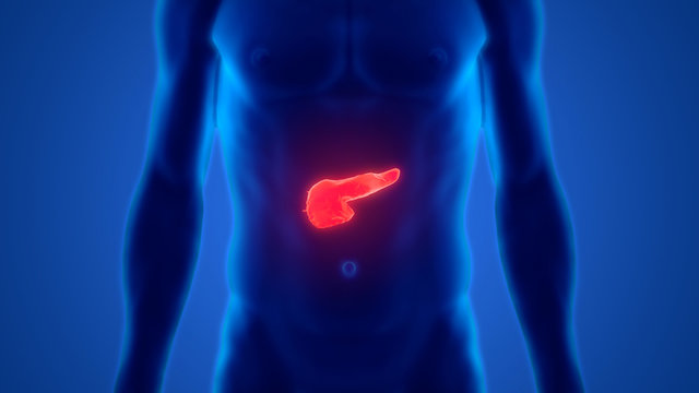 Human Internal Digestive Organ Pancreas Anatomy