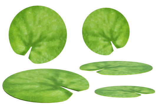 Lily Pad Illustration Stock Photos And Royalty Free Images Vectors And Illustrations Adobe Stock
