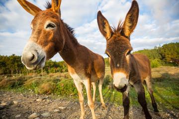 Foto op Plexiglas Ezel Wild donkey