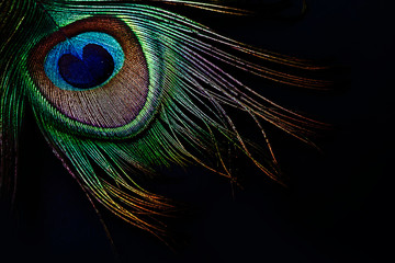 Photo sur Toile Paon Peacock feather on black background