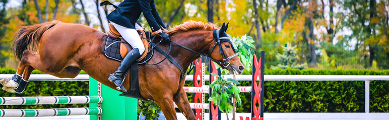 Horse and rider in uniform performing jump at show jumping competition. Horse horizontal banner for website header design. Equestrian sport background. Selective focus. Wall mural