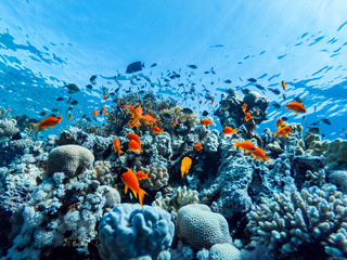 Garden Poster Coral reefs colorful corals and exotic fishes at the bottom of the Red sea. beautiful natural summer background