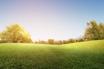 Ingelijste posters Cultuur Green grass field with trees