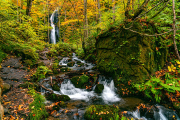Obraz View of Komoi no Tagi waterfall in autumn season at Oirase Gorge with the colorful foliage forest and the green mossy rocks covered with the falling leaves in Towada Hachimantai National Park, Japan. - fototapety do salonu