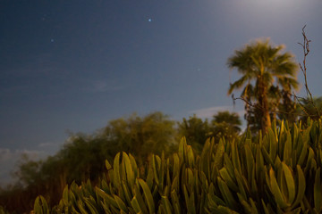 Plants of Cyprus at night under moon light.