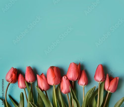 Red tulip flower on pastel blue background from above. Spring bud bouquet creative frame design. Valentine, Mother's day and wedding greeting card.