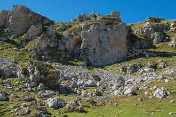 Sheep in national park Picos de Europa in Cantabria,Spain,Europe