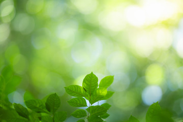 Poster Natuur Green nature background. Closeup view of green leaf with beautiful bokeh under sunlight for natural and freshness wallpaper concept.