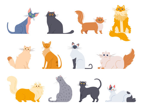 Cat breeds. Cute fluffy cats, maine coon, bobtail, siamese cat and funny sphynx cat, pedigree breeds pets isolated illustration icons set. Flat vector kittens bundle