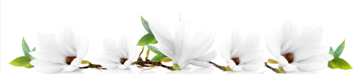 Deurstickers Magnolia Magnolia biała