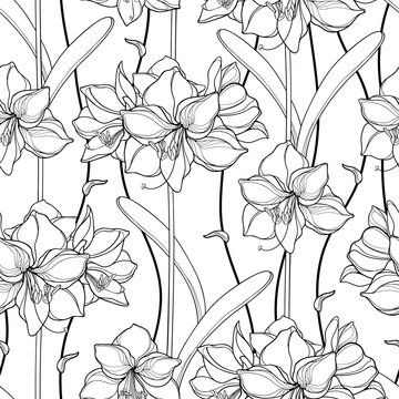 Seamless pattern with outline Amaryllis or belladonna Lily flower and leaf in black on the white background.