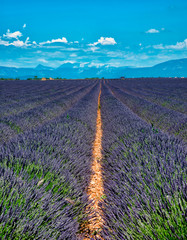 Türaufkleber Lavendel Champ de lavande à Valensole, France