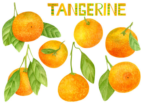Watercolor tangerine set. Hand drawn lettering and botanical illustration of mandarins with leaves. Clipart citrus elements isolated on white background.