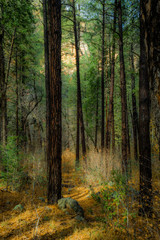 Wall Murals Forest Fall for Planet Sedona