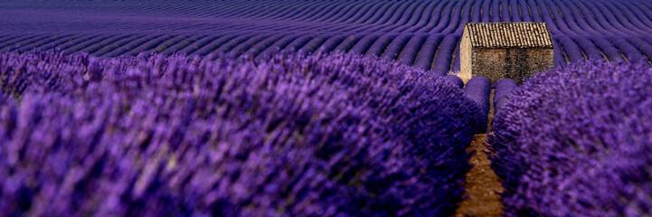 Fototapeta Lavender 46 obraz