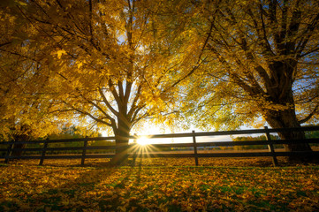 Fototapeta Trees in the fall