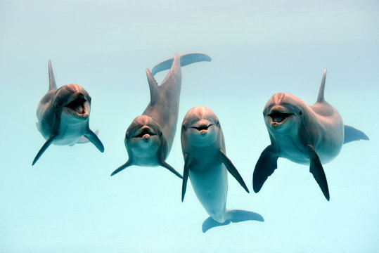 Dolphin laughing