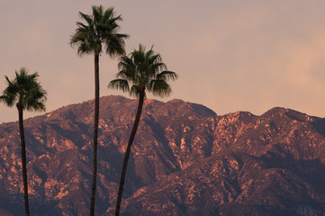 Wall Murals Deep brown Image taken from Pasadena of the San Gabriel Mountains at sunset time with palm tress in the foreground.