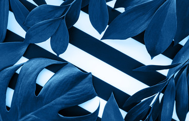 Green leaves toned classic blue color