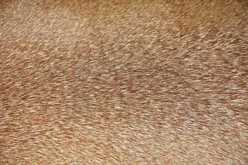 Photo sur Toile Cerf Brown deer fur used as a background image.