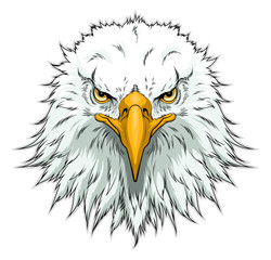 Bald eagle head front