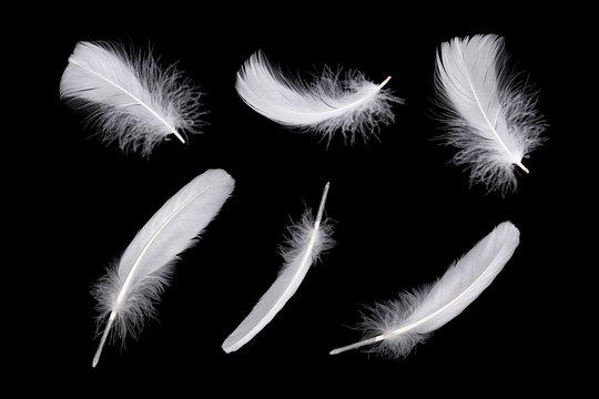 Set of white feathers isolated on black background