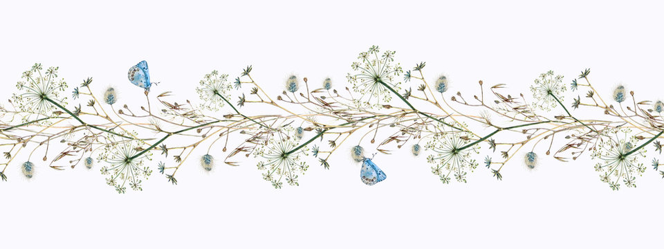Watercolor hand-drawn seamless border of dill flowers, forest flowers and ears of corn with blue butterflies, Lycaenidae, on a white background.