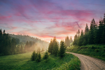 Beautiful landscape at sunset with fir trees in spring.