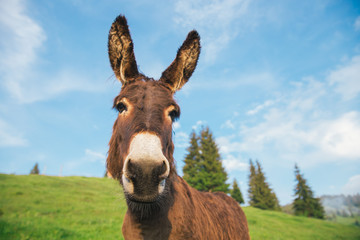 Picture of a funny donkey at sunset.