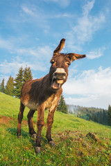 Photo sur Aluminium Ane Picture of a funny donkey at sunset.