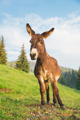 Tuinposter Ezel Picture of a funny donkey at sunset.