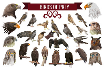Set of birds of prey, vector illustrations Wall mural