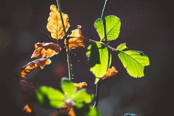 Die Blätter im Herbst