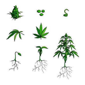 Vector cannabis icons set. Green cannabis logo isolated on white. Medical marijuana. Cartoon flat style