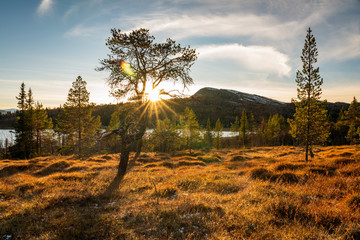 Sunrays shines through tree near mountain lake and forest during sunset hours. Outdoors and...