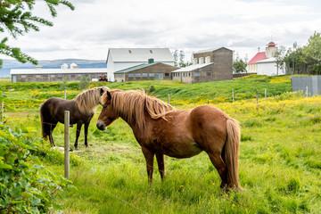 Koń na łące  - fototapety na wymiar