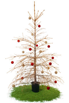 Dried Christmas tree with balls on branches, needles crumbled. Isolated on white background