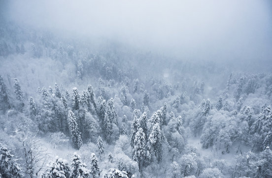 Snowfall in winter in the mountains. Snow-covered mountain forest in the fog.