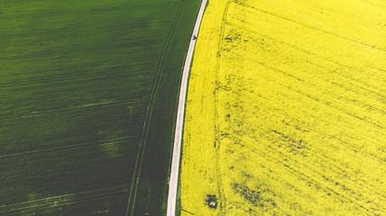 Papiers peints Jaune Route transversant des champs