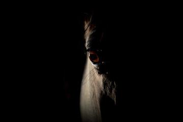 Stores à enrouleur Chevaux Oeil du cheval